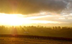 Sun Sets @ Anne Amie @ Anne Amie Vineyards | Carlton | Oregon | United States