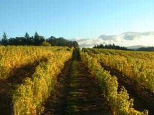 Thanksgiving Weekend Open House @ Anne Amie Vineyards   Carlton   Oregon   United States